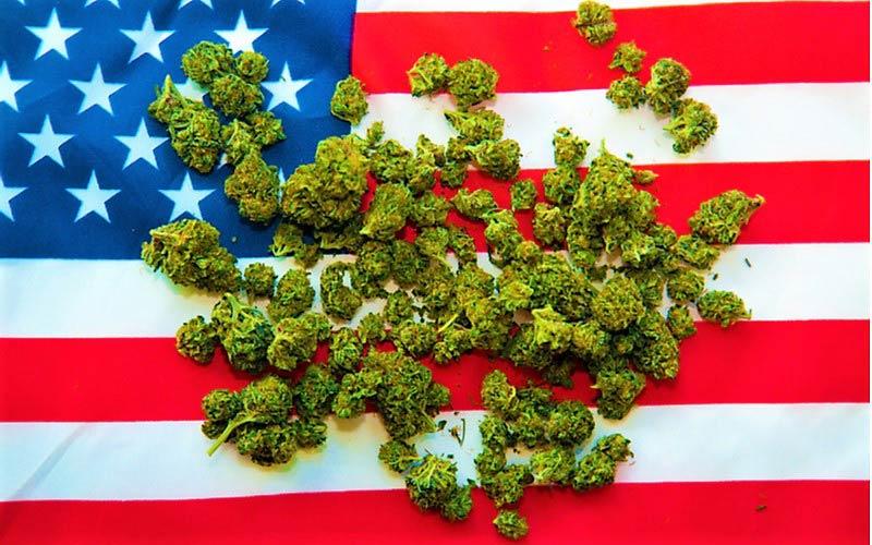 10 najważniejszych zalet medycznej marihuany, HolenderskiSkun, Holenderski Skun