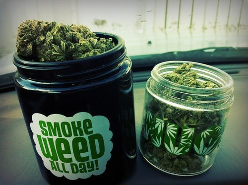 Rodzaje marihuany, HolenderskiSkun, Holenderski Skun