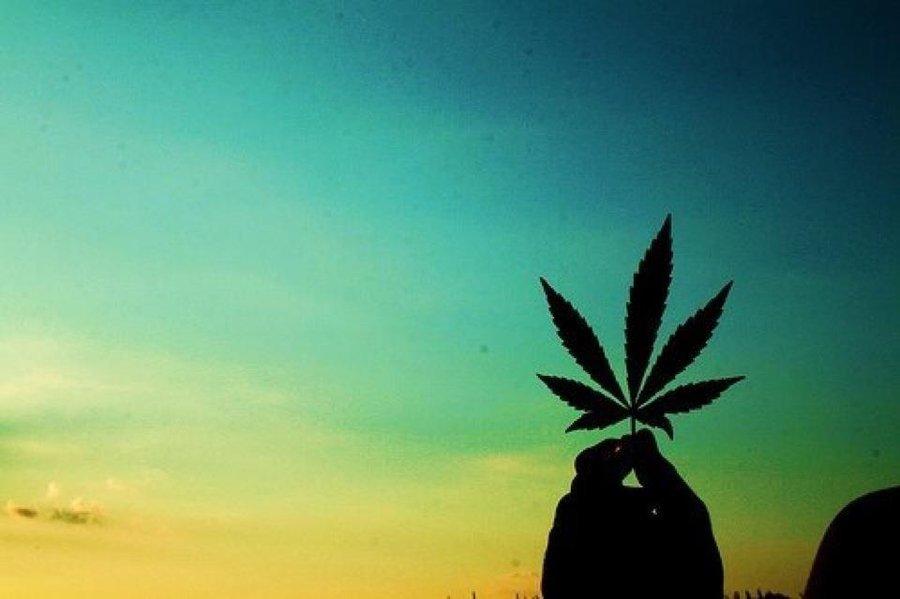 Australia przesuwa limity dotyczące zakazanej medycznej marihuany, HolenderskiSkun, Holenderski Skun