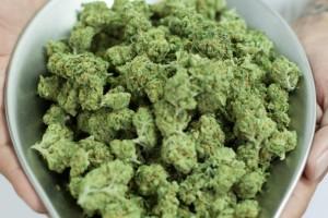 medyczna-marihuana-jest-bardzo-zdrowa