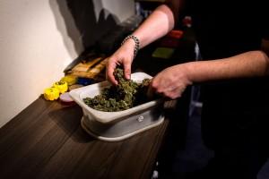 Nowe badanie dowodzi, że cannabis pomaga zapobiegać śmierci u pacjentów z urazami mózgu, HolenderskiSkun, Holenderski Skun