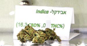 Charlotte's Web – szczep marihuany bogaty w CBD, HolenderskiSkun, Holenderski Skun