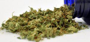 Dochody podatkowe ze sprzedaży detalicznej marihuany przekraczają wszelkie oczekiwania, HolenderskiSkun, Holenderski Skun