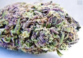 Jak określić, czy marihuana jest dobra czy zła, HolenderskiSkun, Holenderski Skun