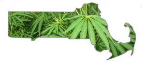 Czy pielęgniarka będzie mogła zalecać stosowanie medycznej marihuany? Nowa propozycja służb zdrowia w Massachusetts!, HolenderskiSkun, Holenderski Skun