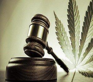Jak bezpieczna jest marihuana?, HolenderskiSkun, Holenderski Skun