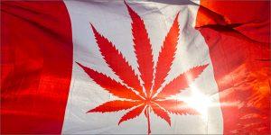 Koszt marihuany w Kanadzie, HolenderskiSkun, Holenderski Skun
