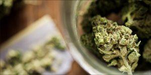 Sprzedaż cannabis w USA osiągnie 17 miliardów dolarów, HolenderskiSkun, Holenderski Skun
