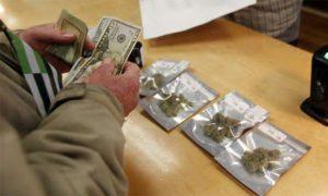Titusville chce umożliwić sprzedaż marihuany, HolenderskiSkun, Holenderski Skun