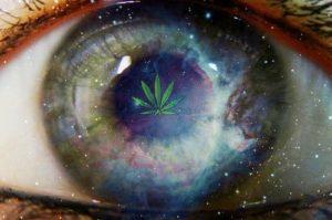 Cannabis wpływa na poprawę wzroku, HolenderskiSkun, Holenderski Skun