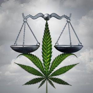 Gruzja zalegalizowała stosowanie cannabis, HolenderskiSkun, Holenderski Skun