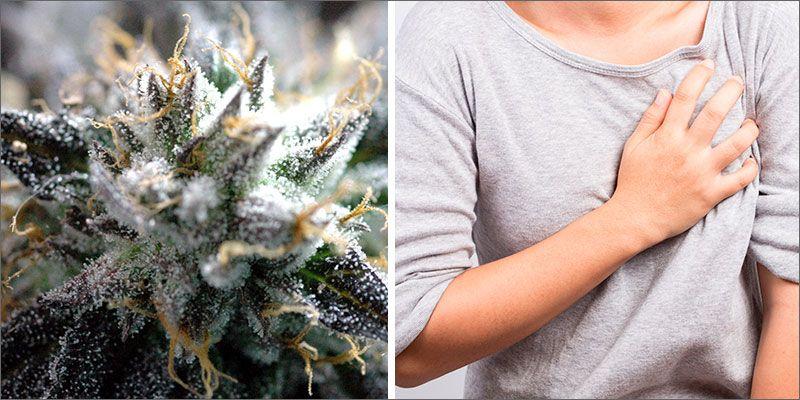 Pozytywny Wpływ Marihuany na Cholesterol, HolenderskiSkun, Holenderski Skun