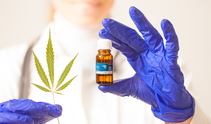 Układ endokannabinoidowy, HolenderskiSkun, Holenderski Skun
