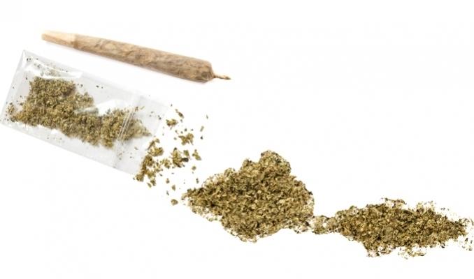 Mielenie marihuany bez młynka, HolenderskiSkun, Holenderski Skun