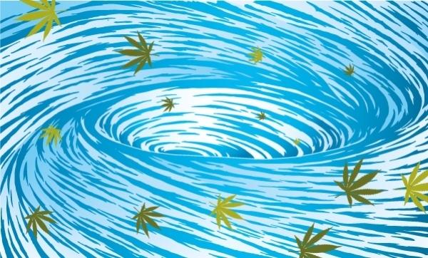 Spłukiwanie roślin cannabis wodą, HolenderskiSkun, Holenderski Skun