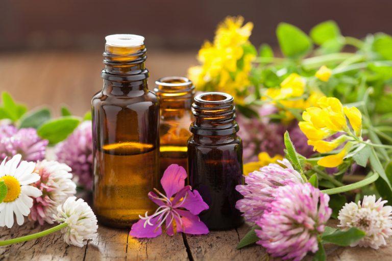 4 organiczne pestycydy, które możesz zrobić sam, HolenderskiSkun, Holenderski Skun