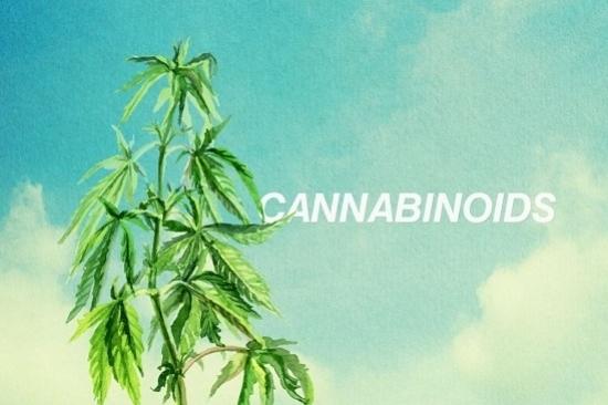 Kannabinoidy: Przewodnik po podstawach, HolenderskiSkun, Holenderski Skun