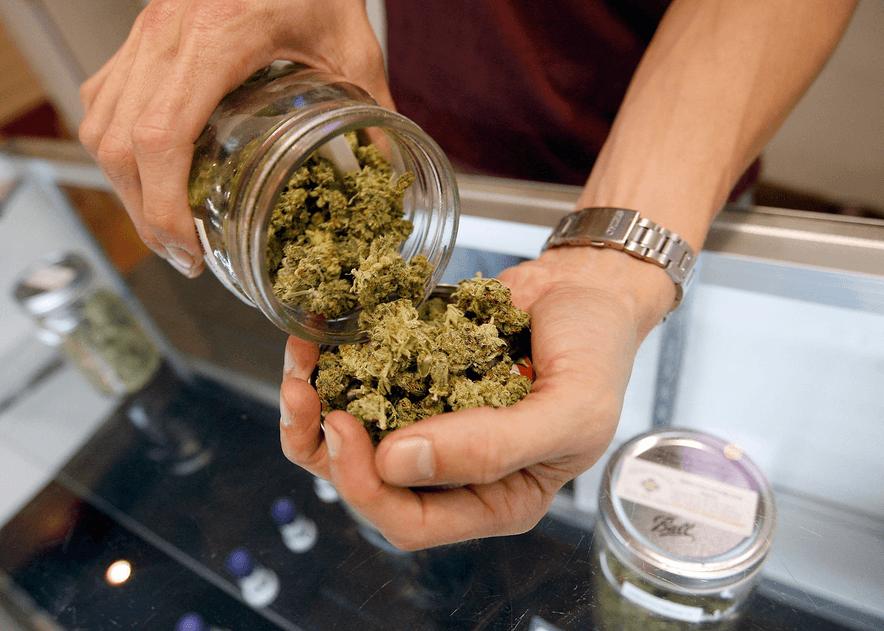 Jak Przygotować Oliwę z Oliwek z Dodatkiem Marihuany, HolenderskiSkun, Holenderski Skun