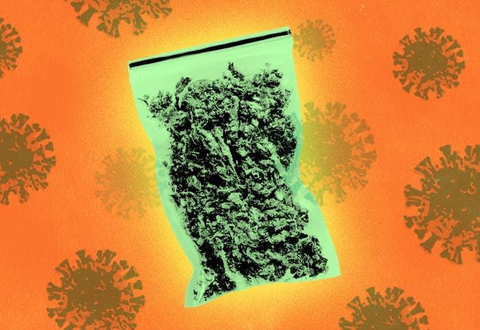 Kupowanie Dobrej Jakości Marihuany, HolenderskiSkun, Holenderski Skun