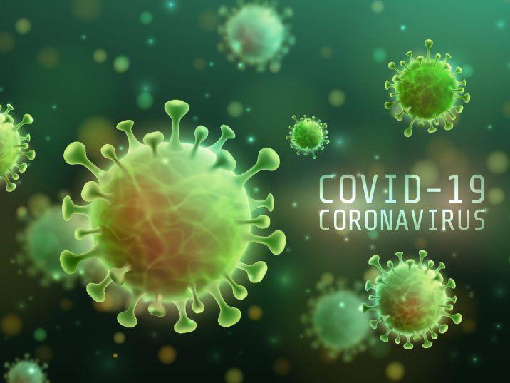 Kwarantanna z powodu COVID 19? Postaw na artykuły spożywcze, HolenderskiSkun, Holenderski Skun