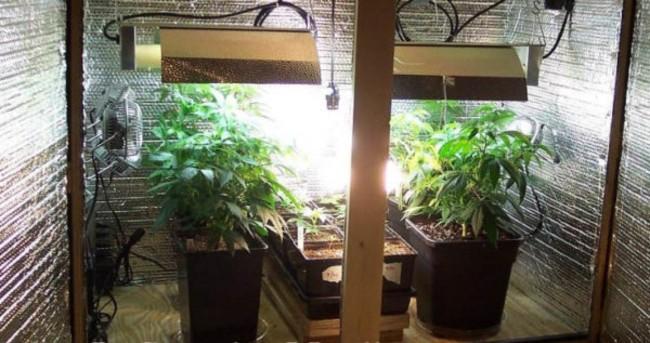 Jak Pozbyć Się Zapachu Marihuany z Ubrań, HolenderskiSkun, Holenderski Skun