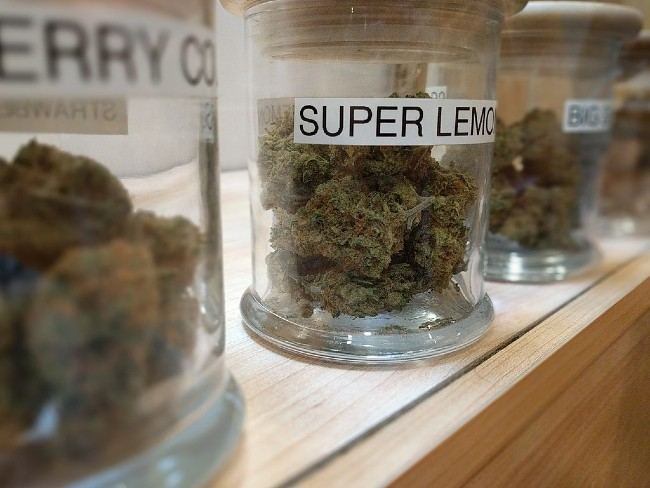 Czy Konsumenci Cannabis Są Zdrowsi?, HolenderskiSkun, Holenderski Skun