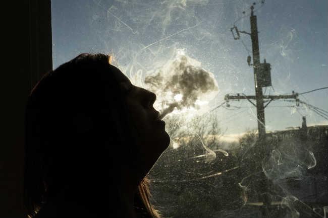 Niedobór Kannabinoidów Wpływa Na Twoje Zdrowie, HolenderskiSkun, Holenderski Skun