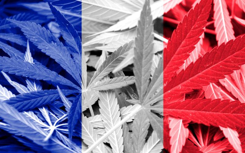Francja Planuje Rozdawać Darmową Marihuanę w 2021, HolenderskiSkun, Holenderski Skun