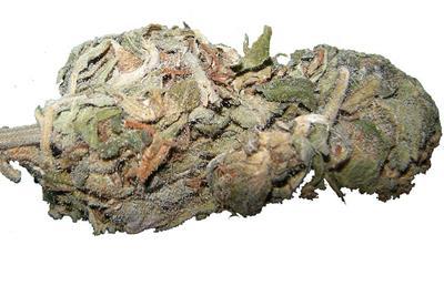 Sposoby Na Szybsze Ustąpienie Efektów Marihuany, HolenderskiSkun, Holenderski Skun